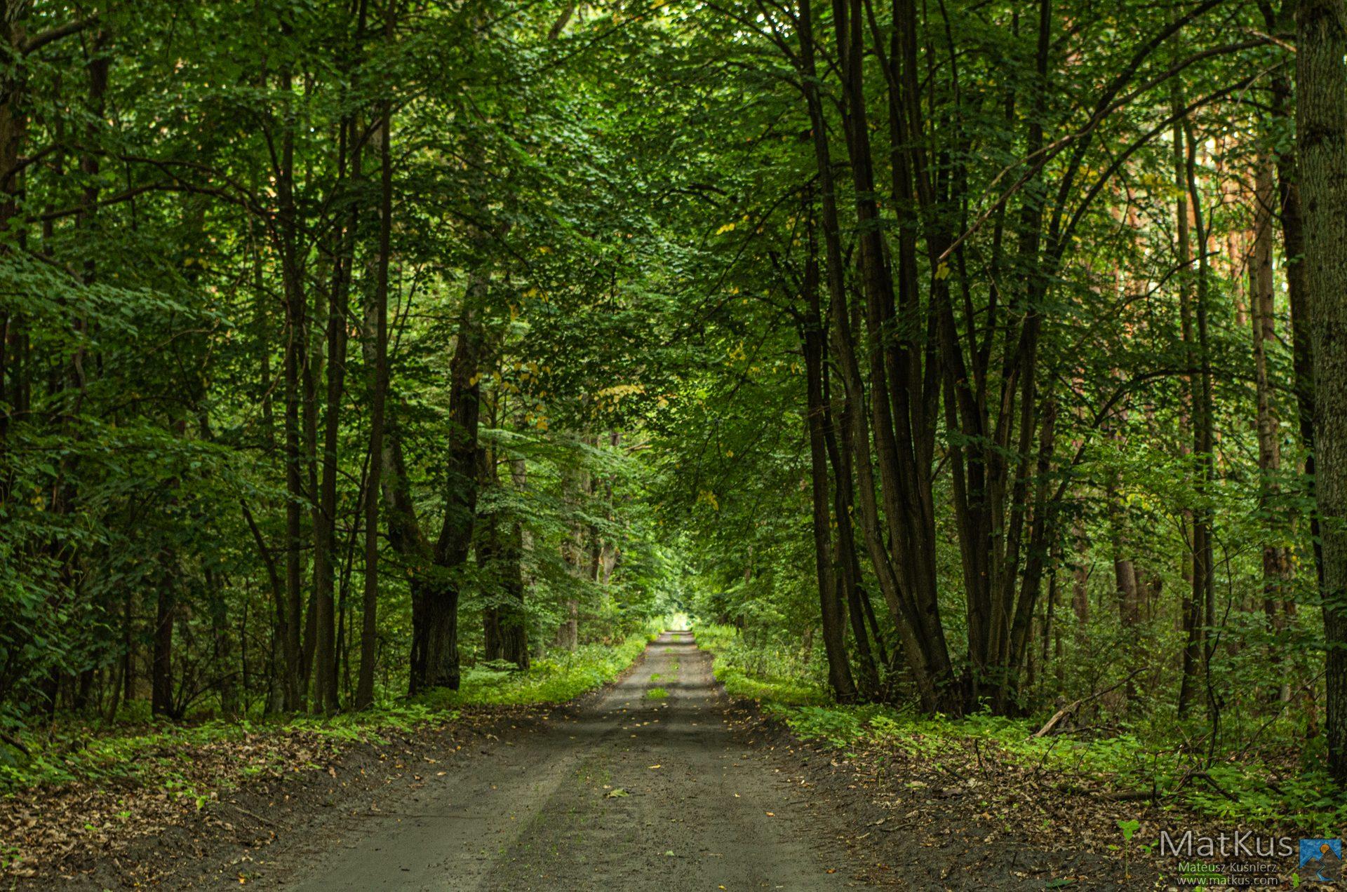 ścieżka do Szumiradu