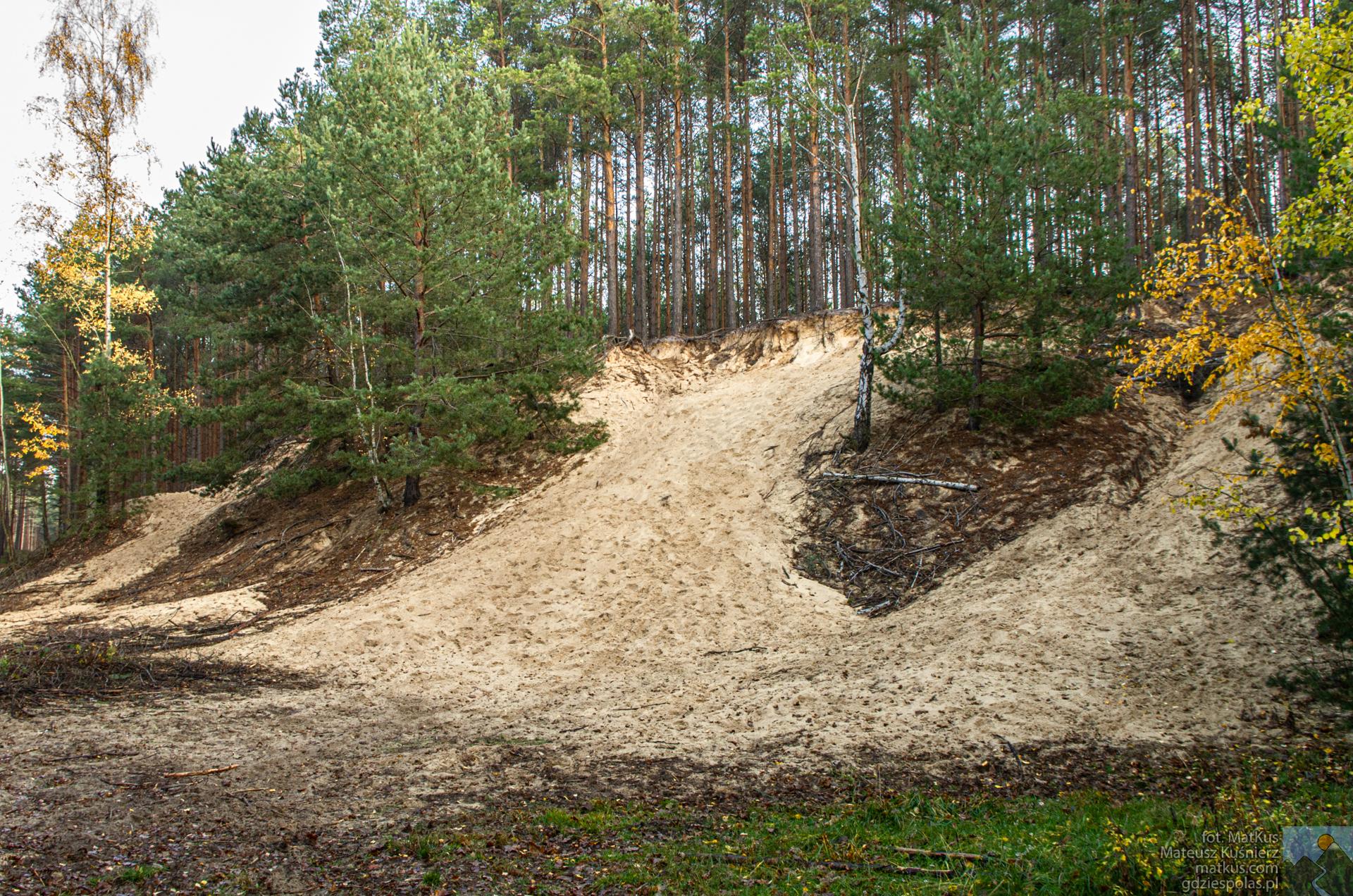 Wydmy w pobliżu Łubnian w Opolskiem
