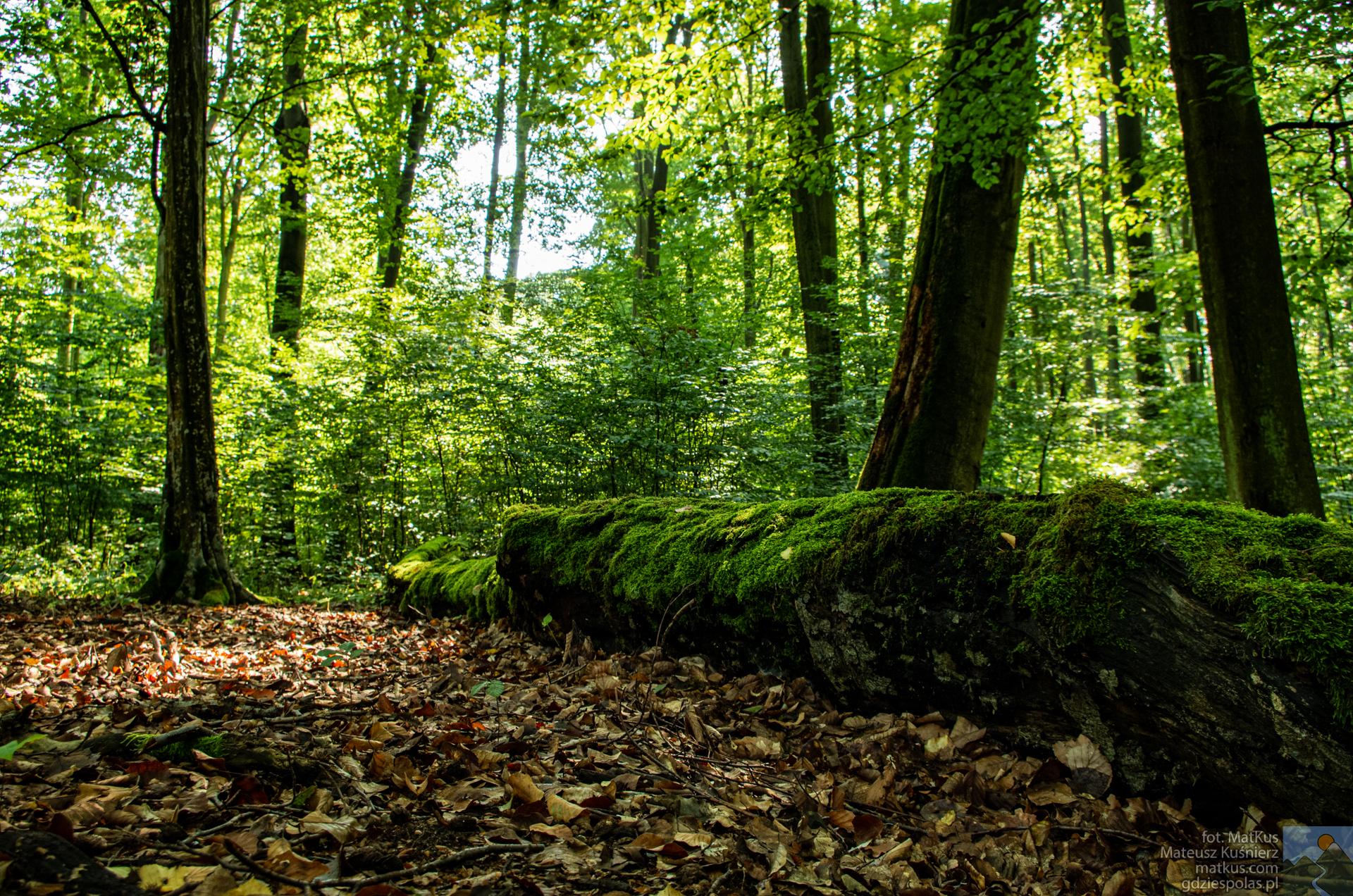 Rezerwat Lubsza, Nadleśnictwo Brzeh