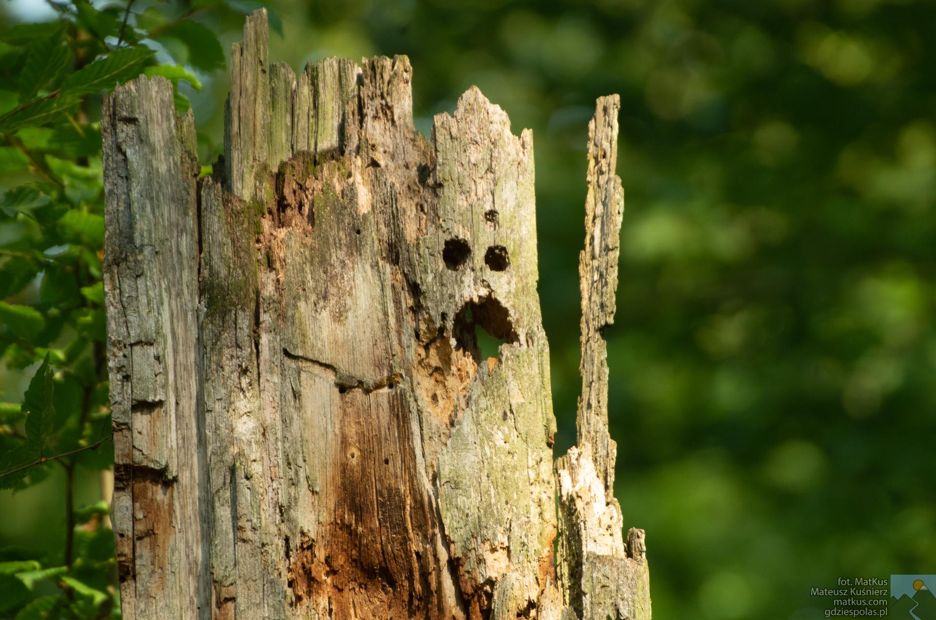 Rezerwat Lubsza, przestraszone drzewo