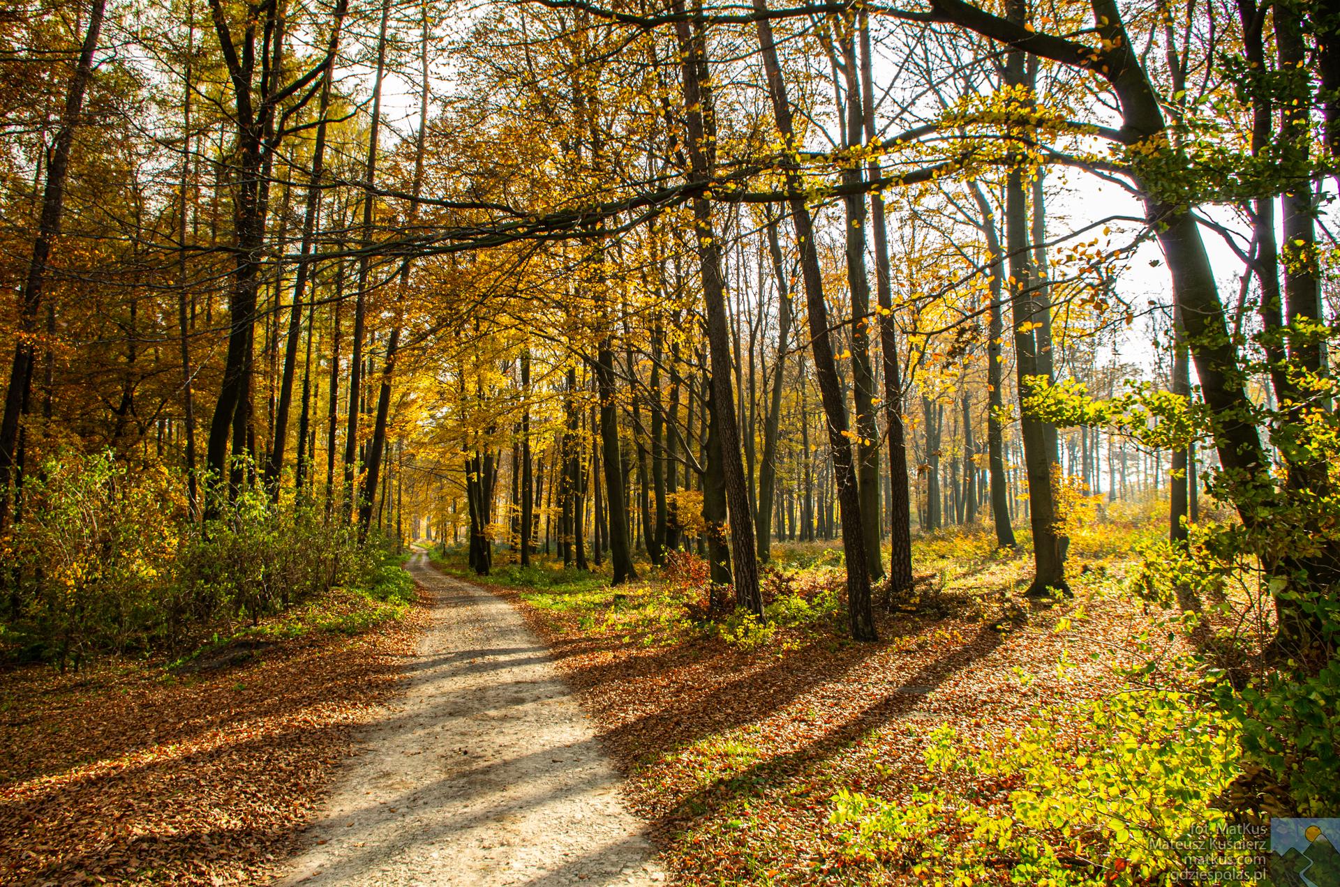 leśna ścieżka pomiędzy Ligotą Dolną, a Lesiskiem